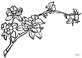 coloring pages beautiful branch coloring page 4c9aarlgi pages