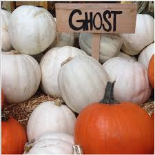 white pumpkins pumpkins lumina white information recipes and facts
