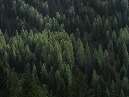 free images tree nature wilderness branch evergreen alpine