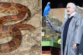 snake salesman sells u0027resting u0027 reptile to unsuspecting collector