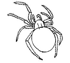 cartoon spiders coloring cute spider spider