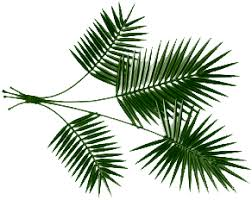 palm branches for palm sunday hill shepherd a joyous palm sunday to you