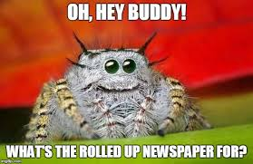 Hey Buddy Meme - oh hey buddy what s the rolled up newspaper for
