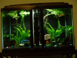 Betta than a Bowl betta fish aquariums & betta tank inspiration