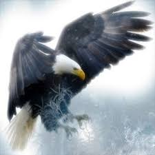 strange eagle wallpapers white tailed eagle 1920x1080 wallpapers pinterest white