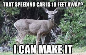 Deer Meme - deer meme disclosure news online