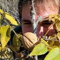 buy walnut trees at best price plants
