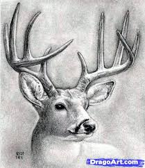draw deer head buck dear head step step realistic