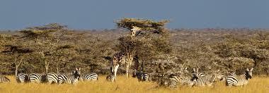 safari africa u0027s leading safari tour operator wilderness safaris