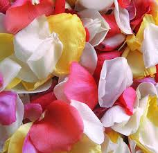 where can i buy petals s day petals petals online wholesale
