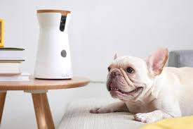 Home Design Story Dog Bone by 8 Home Tech Gadgets For Your Pet Curbed