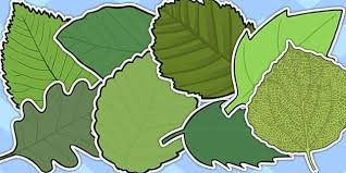 variety green leaves a4 cut outs green leaves cut role play