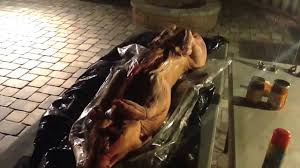 roast a whole hog for your backyard party it u0027s easy youtube