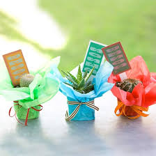 Favors For Adults by Favors For Adults Mini Cactus Birthday And Cacti