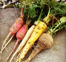 Chinese Root Vegetables - our physical and emotional health in winter in chinese medicine