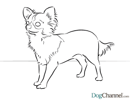 art of chihuahua single coloring page chihuahua coloring page free