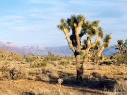 plants native to arizona arizona habitats the arizona experience landscapes people