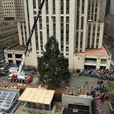 Where Is The Christmas Tree In New York City Rockefeller Christmas Tree Goes On Display In New York City
