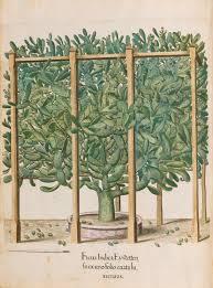 besler basilius 1561 1629 hortus eystettensis nuremberg