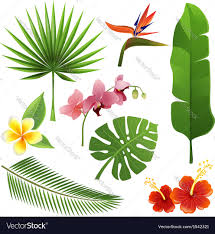 Tropical Plants Pictures - tropical plants royalty free vector image vectorstock