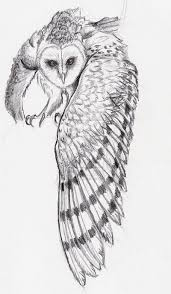 barn owl in flight tattoo sketch photo 4 real photo pictures