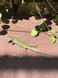 Big Lizard In My Backyard Lyrics Holidays For Music Lovers Ibiza U0026 Music Festivals