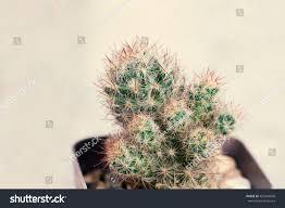 small flower pot small cactus plant black flower pot stock photo 459544696