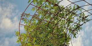 How To Make Trellis For Peas Building A Long Lasting Trellis For Peas Beans And More My
