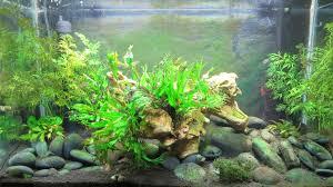 how to control aquarium algae