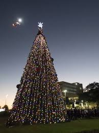 sacred throws the switch to light up 40 ft tree