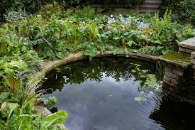 file an ornamental pond capel manor enfield jpg