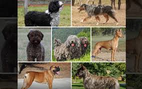 national show 7 new sanctioned pooches tmz