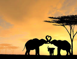 elephant family digital by freitas