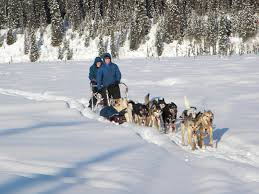 anchorage ak dogsledding day tour guided alaska dog sledding