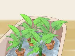 simple ways to water plants while you u0027re away wikihow