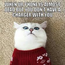 White Cat Meme - 34 best shocked sweater cat meme images on pinterest kitty cats