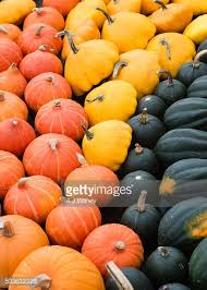 autumn ornamental vegetables stock photo getty images