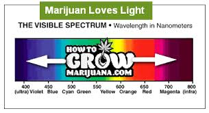 best led weed grow light spectrum led grow lights