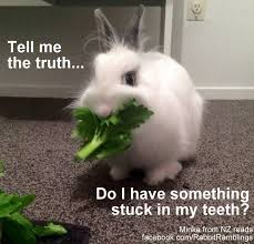 Have A Great Day Meme - rabbit ramblings funny bunny monday meme day