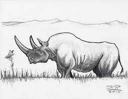 black rhino and butterfly drawing by sean paradise