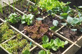 how to start a home garden best idea garden
