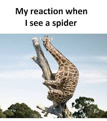 Funny Spiders Memes Of 2017 - my reaction funny pictures quotes memes funny images funny