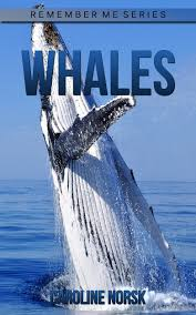buy whales fun facts u0026amp photos of animals for kids discover
