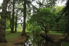 a forest on the bolderwood ornamental drive picture of
