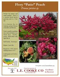 natural dwf patio fruit trees