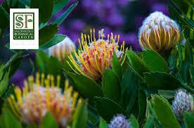 at the sf botanical garden society don baldocchi gives back