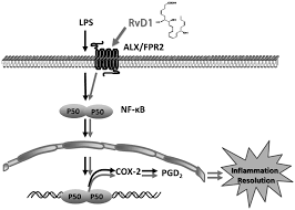 resolvin d1 improves the resolution of inflammation via activating