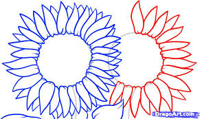 how to draw sunflowers step by step flowers pop culture free