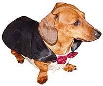 Weiner Dog Halloween Costumes Spoiledrottendoggies Dog Costumes Sizes Dog Halloween