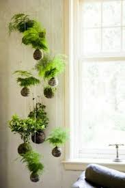 plant wall hangers indoor hanging indoor plants and patio plants hanging plants for the